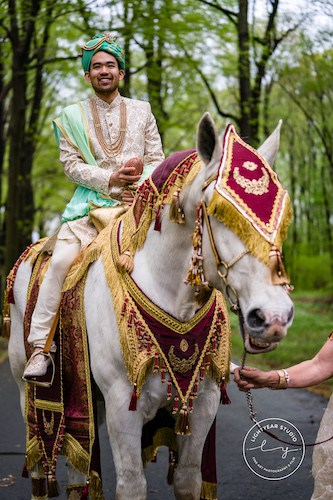Indian wedding - Baarat - Groom on white horse - decorated horse for Indian wedding